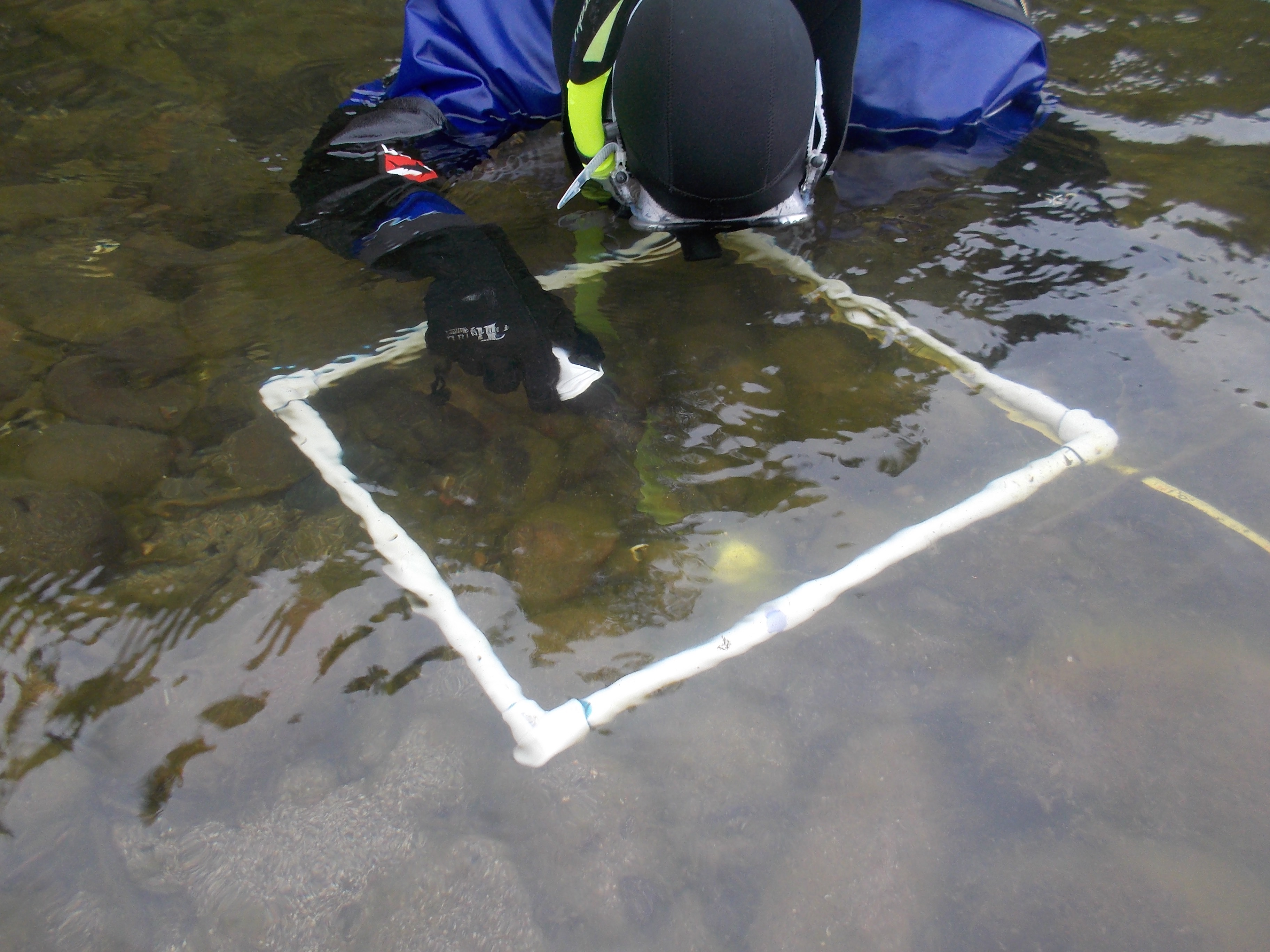 Laura taking a surface sample of mussels within a quadrat