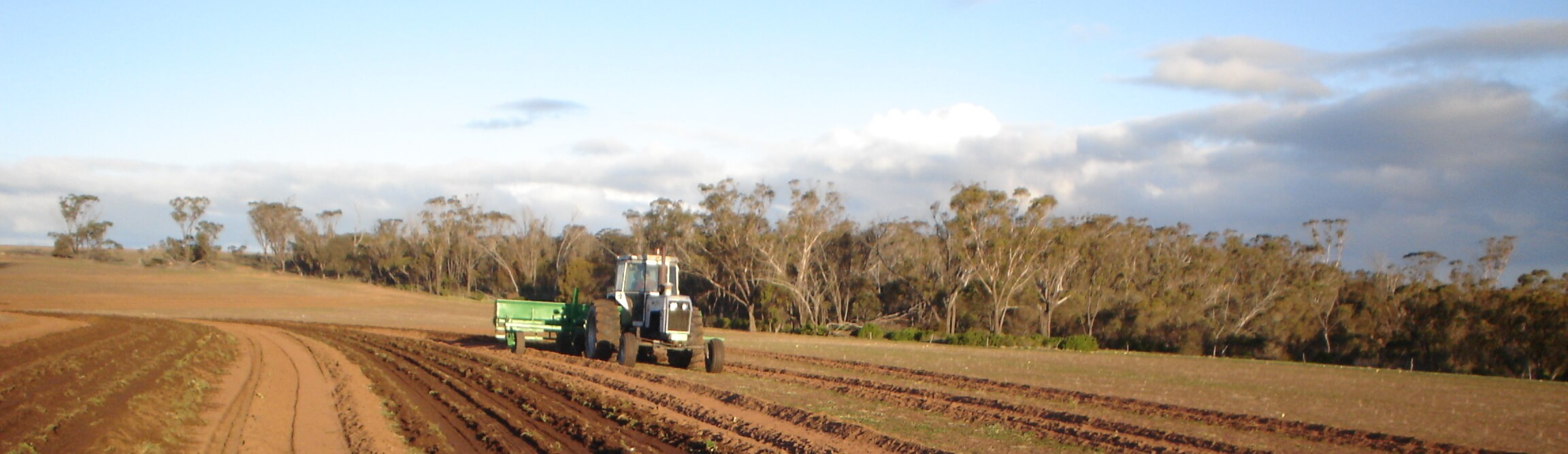 Seeding in a restoration trial at Peniup, Western Australia